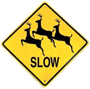Stupid Deer.