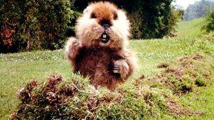 groundhog caddyshack