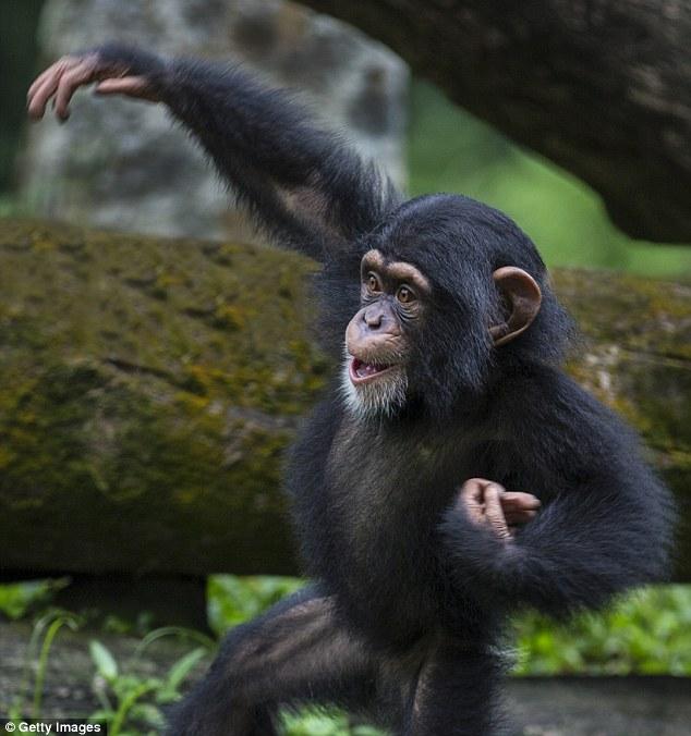 Poop Flinging Monkeys And Origami Condoms Idiotprufs
