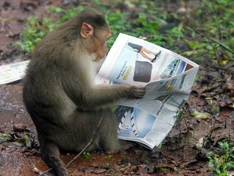 reading monkey