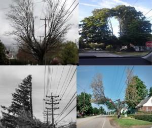 tree maintenance