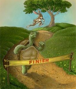 turtle wins
