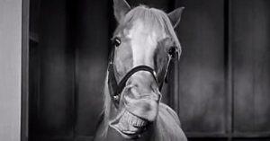 Mr. Ed horse