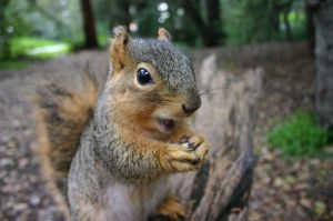 insulting squirrel