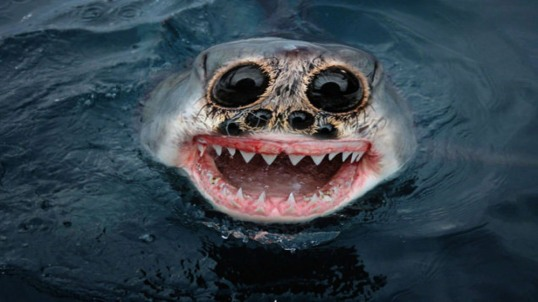 scary fish