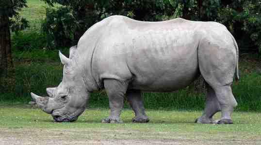 pet rhino